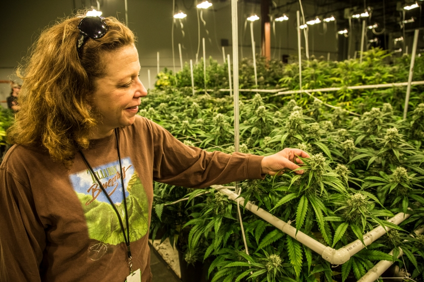 "Christine Kirk is the production manager for Terraoin Care Station. She over sees the harvesters, packagers and many of the logistics of the ""seed to sale"" process that takes at the Aurora cultivation facility."