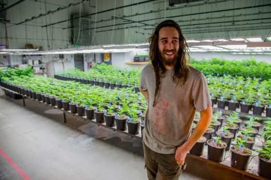 Ian Peak is one of three growers for Terrapin Care Station. He stands in the clone room of the Aurora, Colo. cultivations facility.